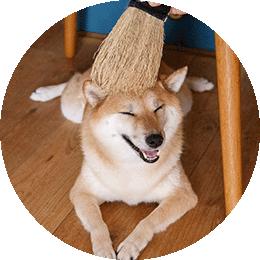 南部箒の縮れが毛をキャッチ